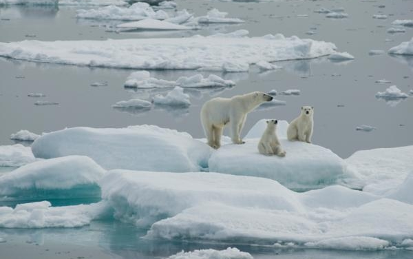 Sustainable Development and Capabilities for the Polar Region